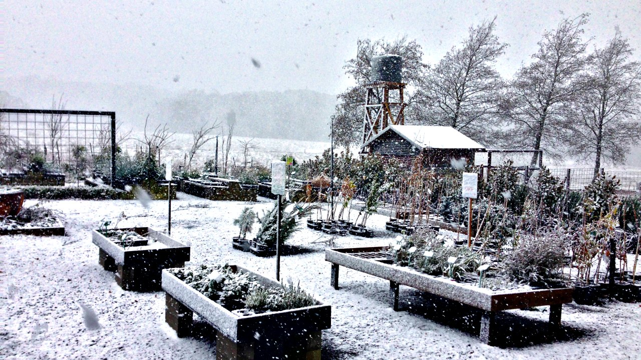 Snow at Blackwood Ridge Nursery