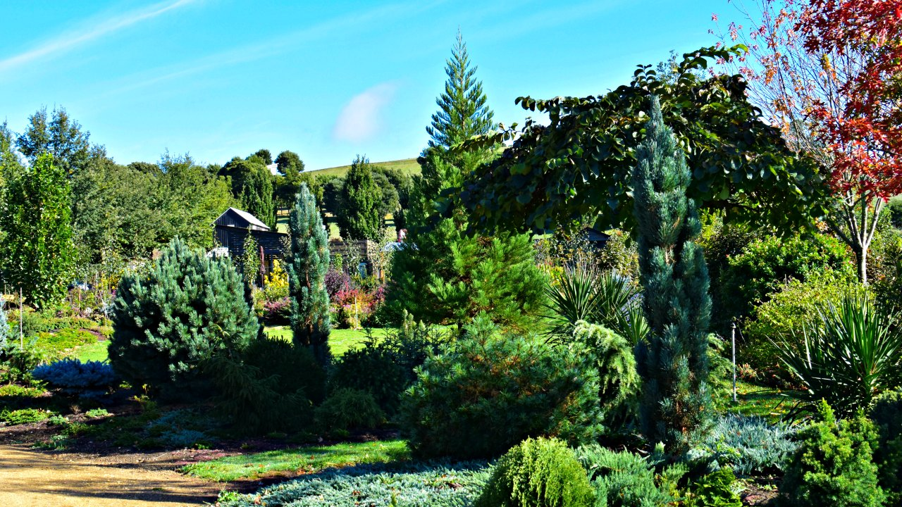 Conifer gardens – Blackwood Ridge